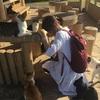 石垣島で猫に囲まれてウハウハになった話~南ぬ浜町緑地公園は猫だらけ~