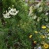 6月16日の庭