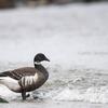 2019年3月23日の鳥撮り(2/2)-茨城県の漁港