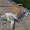 ローゼルと猫とお日さまの日曜日