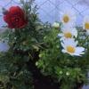 積み上げ式プランターで狭いスペースでもたくさん花を育てよう!