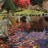 秋色をさがして ダム公園で散紅葉…