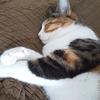 【愛猫日記】毎日アンヌさん#276