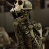 京都大学総合博物館特別展「標本から見る京都大学動物学のはじまり」