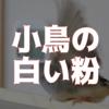 【脂粉】小鳥から落ちる白い粉…一体なに?+鳥類の皮膚雑学