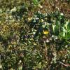 梅とオオイヌノフグリが咲いてた!2020年1月25日までに撮影したデジカメ写真。また笑われました