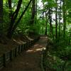 佐久市癒しの森~healing~森林セラピー基地の「平尾の森」を散策