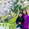 日本旅行2017年4月⑥✈『横浜 三溪園』