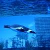 サンシャイン水族館からのクルーズクルーズランチで充実した休日を演出