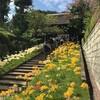 彼岸花が咲き誇る西方寺