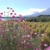 富士山と秋の風