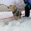 マウントジーンズ那須スキー場冬のドッグラン訪問・2020‐2021シーズン