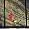 ◆'19/11/17    獅子ヶ鼻湿原・晩秋④…駐車場への戻り~帰路