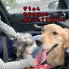 ロハスフェスタ東京に犬を連れて行ってきた!