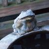 静かな温泉ブログの、PV数の多い記事3