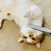 ねこじゃすりが気持ち良すぎてクネクネしてしまう猫