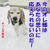 初雪でココちゃん暴走!