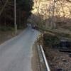 高尾山 はじめての2号路