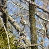 ジィちゃんと探鳥、秋ヶ瀬公園の野鳥たち/2021-02-18
