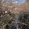 目黒川の桜、17/03/30
