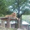 動物園でお散歩