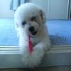 イヌの歯の形状を理解して、歯磨き方法を考える!③