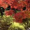 【大阪・京都旅行】紅葉シーズンの嵐山散策
