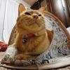 猫ベッドの新たな可能性を探る