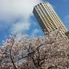 「目黒川の桜」見に行ってきた!