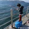 【防波堤の釣り】はじめて行くファミリーフィッシングのススメ