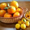 柑橘類いっぱい