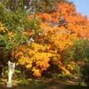 感慨深い秋の日