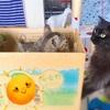 猫による猫への教育、猫による子猫育て⭐︎