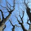 ◆'19/03/20    初めての角田山②…キョロキョロしながら登る