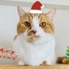 クリスマス先取り!猫仲間から届いた愛猫へのクリスマスプレゼントをご紹介。