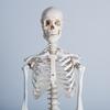 最近よく聞く「骨格診断」について物思う。