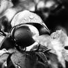 OLYMPUSのコンデジ 「XZ-10」で2017年5月15日までに撮影した写真を紹介します。モノクロの「カナヘビ」か「ニホントカゲ」です。トカゲ注意