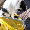 【猫画像】可愛いから白黒猫をもう一回紹介していく