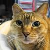 2月後半の #ねこ #cat #猫 どらやきちゃんB