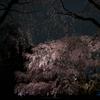 桜撮影記2018/六義園