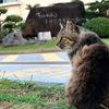 猫がたくさんいる宜野湾トロピカルビーチ