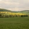 菜の花を求めて ドイツへ 8 ベアレプシュ