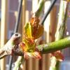 芽吹きの季節は害虫も活発に