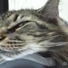 優しい老猫フサボン 命が消える瞬間に立ち会う 今までありがとう