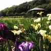 【毎年恒例】梅雨時の楽しみなイベントといえば北山公園の菖蒲まつりな話