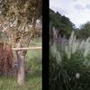 秋の21世紀の森公園をハーフ判カメラで散策