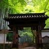 京都 紅葉今が見ごろ 地蔵院(竹の寺)