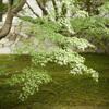 東福寺で濃いめの緑を愛でる