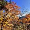 【武蔵御嶽神社】晩秋の奥多摩へ紅葉狩りに行きました【麦山の浮橋】