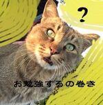 【女性30代】薄毛や抜毛について勉強してみた②〜写真無し〜